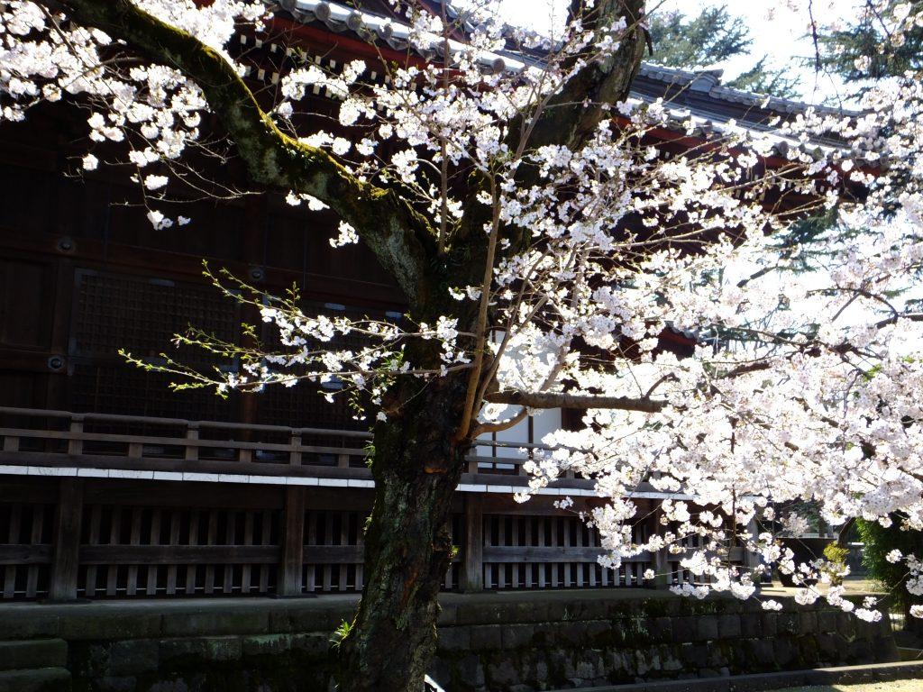 Ueno Kaneji